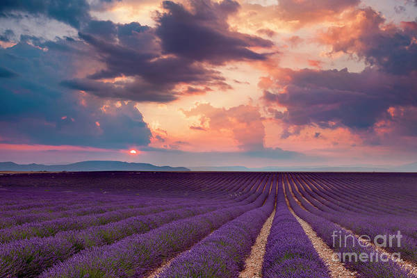 Photograph - Lavender Field At Sunset by Brian Jannsen