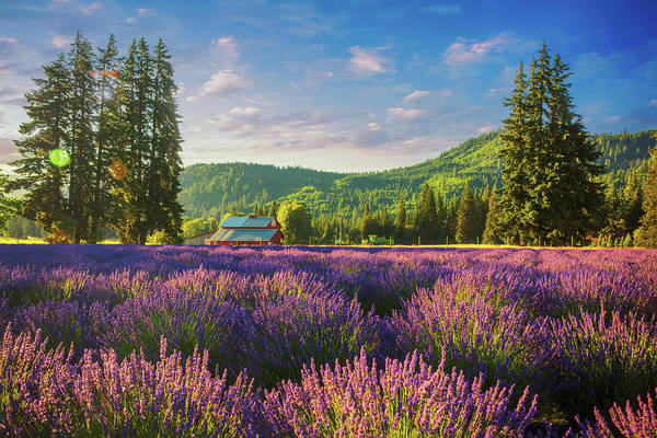 Wall Art - Photograph - Lavender Field  by Emmanuel Panagiotakis
