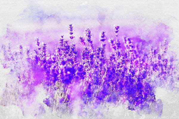 Painting - Lavender Fields - 06 by Andrea Mazzocchetti