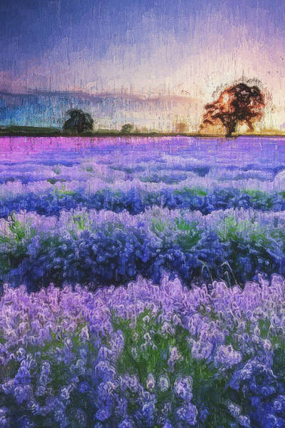 Painting - Lavender Fields - 15 by Andrea Mazzocchetti