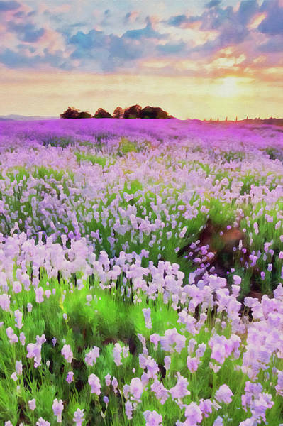 Painting - Lavender Fields - 16 by Andrea Mazzocchetti