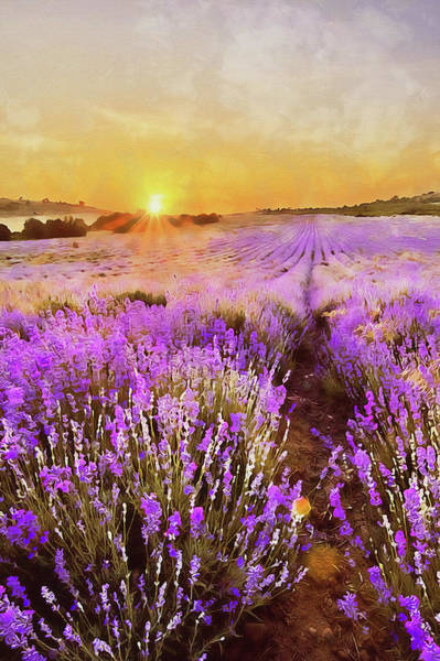 Painting - Lavender Fields - 17 by Andrea Mazzocchetti