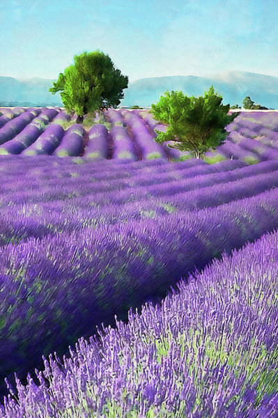 Painting - Lavender Fields - 20 by Andrea Mazzocchetti