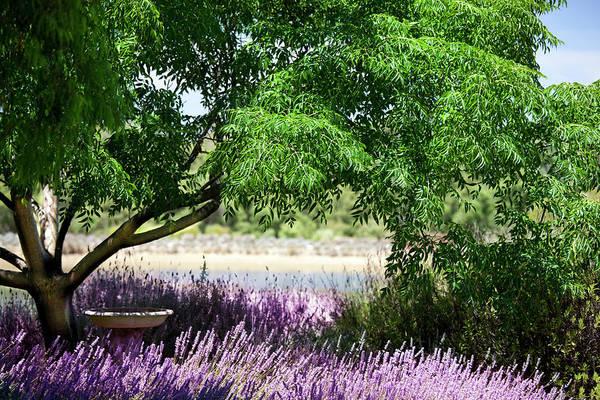 Villa Photograph - Lavender Gardeen by Lockiecurrie