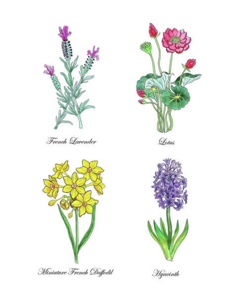 Painting - Lavender Lotus Daffodils Hyacinth Botanical Watercolor by Irina Sztukowski