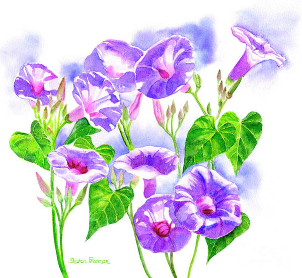 Glory Painting - Lavender Morning Glory Flowers by Sharon Freeman