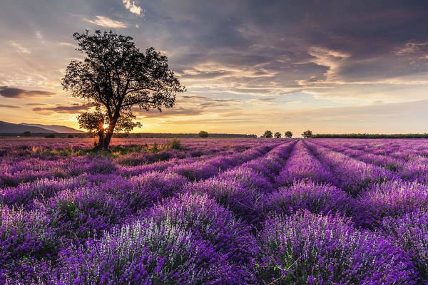 Photograph - Lavender Sunrise by Evgeni Dinev