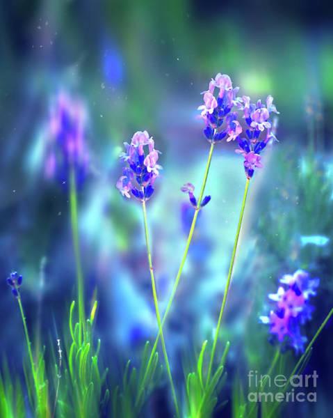 Photograph - Wild Lavender by Susan Warren