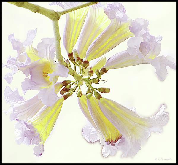 Photograph - Lavender Trumpet Tree Flowers by A Gurmankin