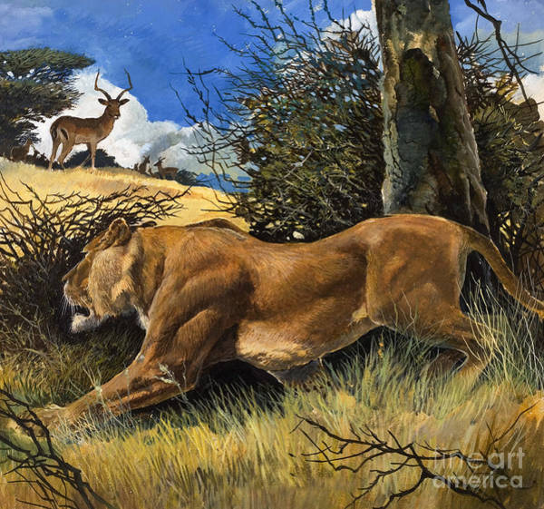 Wall Art - Painting - Law Of The Wild by Gw Backhouse