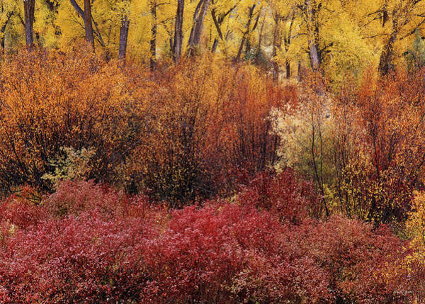 Photograph - Layers Of Color by Leland D Howard
