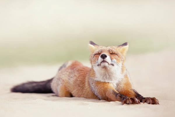 Wall Art - Photograph - Lazy Fox Series - Downward Fox by Roeselien Raimond