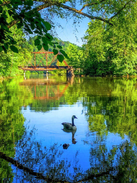 Photograph - Lazy Morning by Debra and Dave Vanderlaan