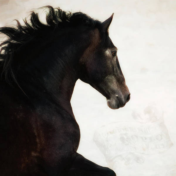 Wall Art - Photograph - Le Cheval by Pamela Steege