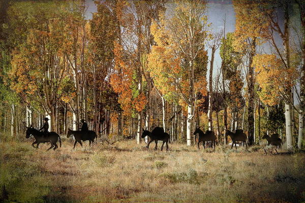 Wall Art - Photograph - Leader Of The Pack by Donna Kennedy