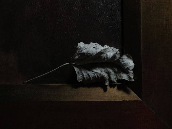 Photograph - Leaf And Frame by Attila Meszlenyi