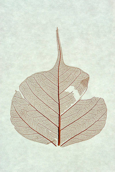 Photograph - Leaf by Christopher Johnson