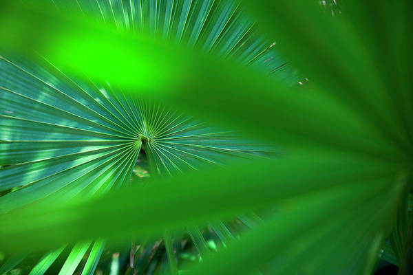 Mayan Riviera Photograph - Leaf Detail by Holger Leue