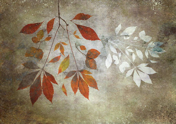 Photograph - Leaf Fall With White by Glenys Garnett