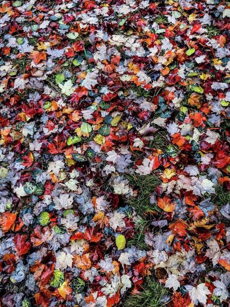 Photograph - Leaf Flooring Img_3838 by Michael Thomas