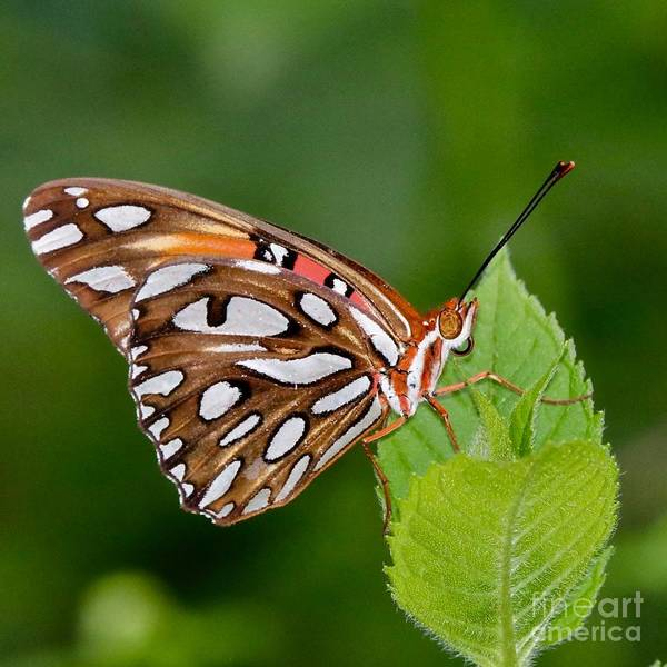 Photograph - Leaf Hugger by Susan Rydberg