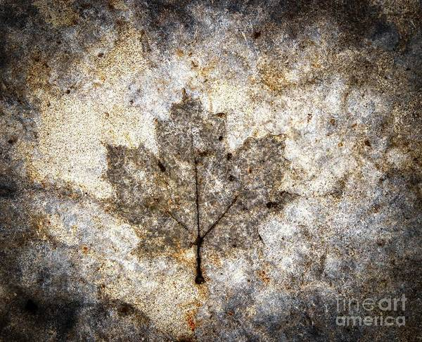 Photograph - Leaf Imprint by Jim Lepard