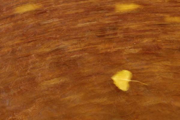 Wall Art - Photograph - Leaf In Motion by Paul Freidlund