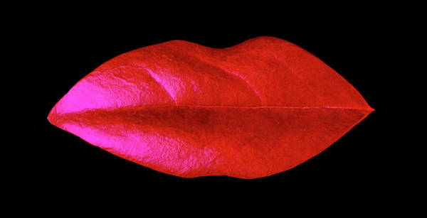 Photograph - Leaf Lips by Garry Gay