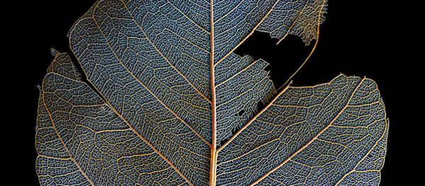 Photograph - Leaf Macro by Christopher Johnson