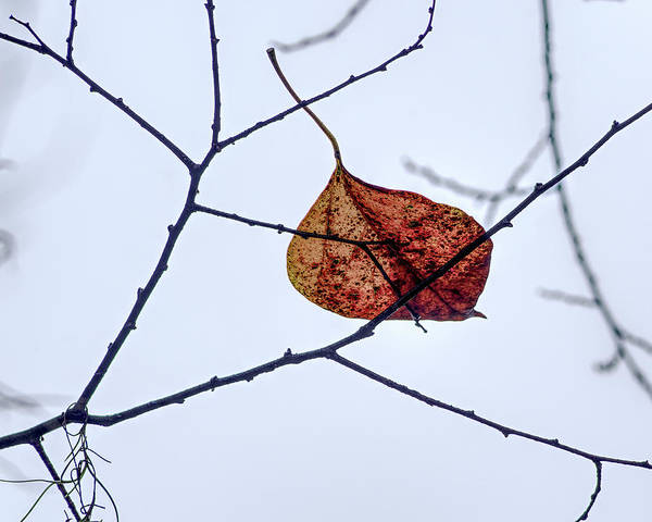 Wall Art - Photograph - Leaf On Branch by Richard Rizzo