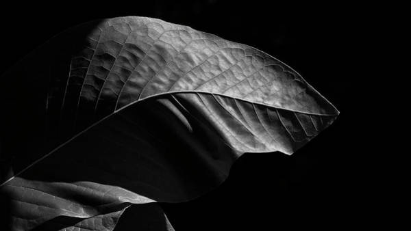 Photograph - Leaf by Patrick M Lynch