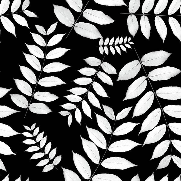 Wall Art - Photograph - Leaf Pattern Black And White by Christina Rollo