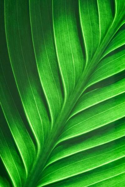 Photograph - Leaf Pattern by Eric Full