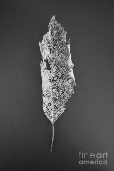 Photograph - Leaf Skeleton Red Filter by Jeni Gray
