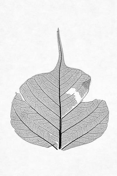 Photograph - Leaf Without Color by Christopher Johnson