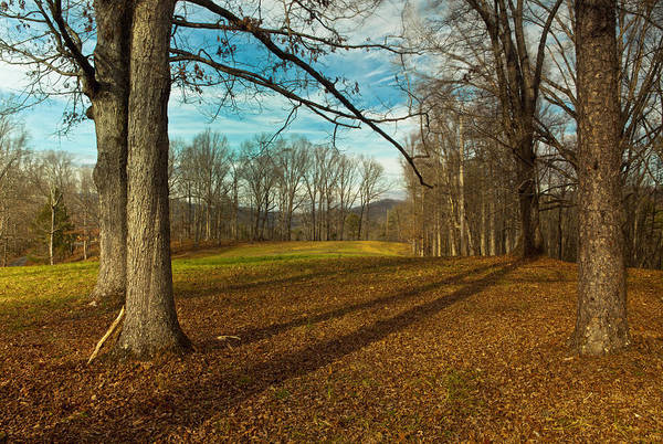 Southern Usa Photograph - Leafless Trees In Wears Valley by Thepalmer
