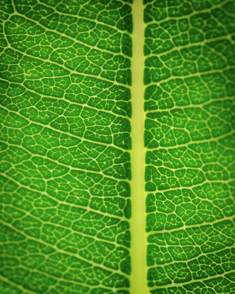 Photograph - Leafy Detail by Jeff Phillippi