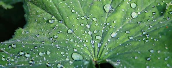 Wall Art - Photograph - Leafy Raindrops by Rick Lawler