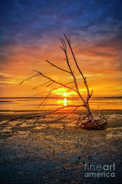 Wall Art - Photograph - Leaning Into The Sunset by Marvin Spates