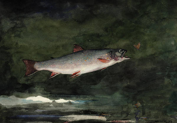 Trout Watercolor Wall Art - Painting - Leaping Trout, 1889 by Winslow Homer