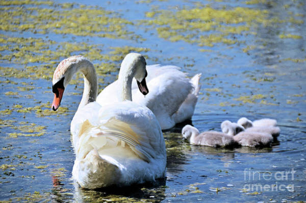 Wall Art - Photograph - Learning To Hunt For Food by Elaine Manley