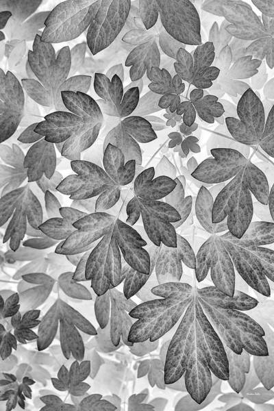 Wall Art - Photograph - Leaves Black And White Plant Pattern by Christina Rollo