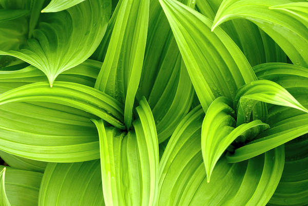 Rain Photograph - Leaves Drops Green by Vladimirovic