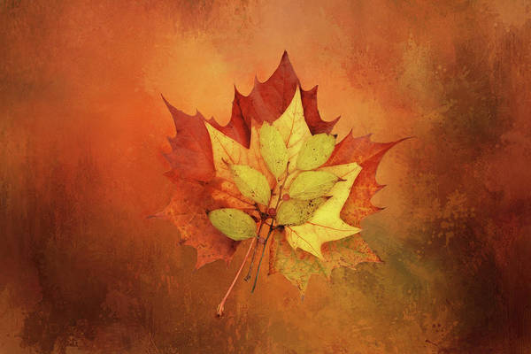 Wall Art - Digital Art - Leaves In Arrangement by Terry Davis