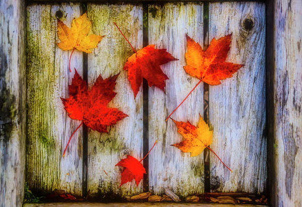 Wall Art - Photograph - Leaves On A Wooden Walkway by Garry Gay