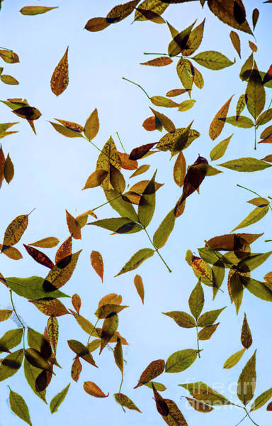 Photograph - Leaves On Glass by Jon Burch Photography