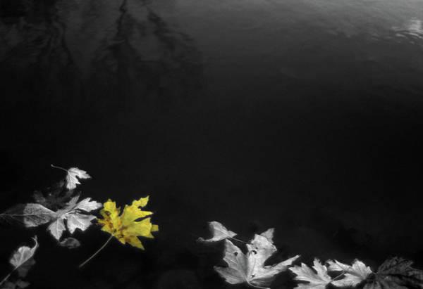 Digital Art - Leaves On The Edge by Jeff Phillippi