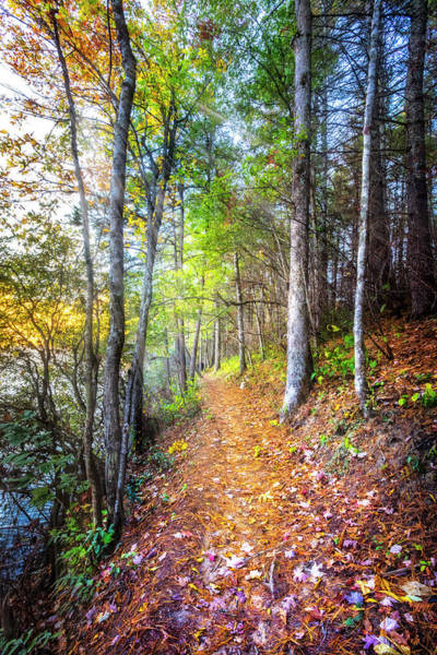 Wall Art - Photograph - Leaves On The Trail by Debra and Dave Vanderlaan