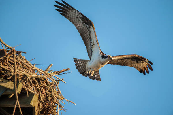 Photograph - Leaving The Nest by Cathy Kovarik