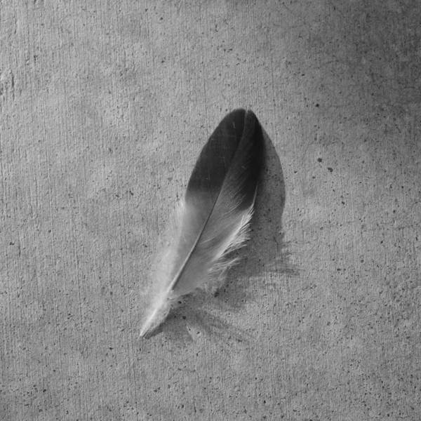 Wing Back Photograph - Left Behind by Bill Tomsa